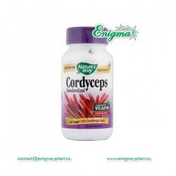 Cordyceps - capsule