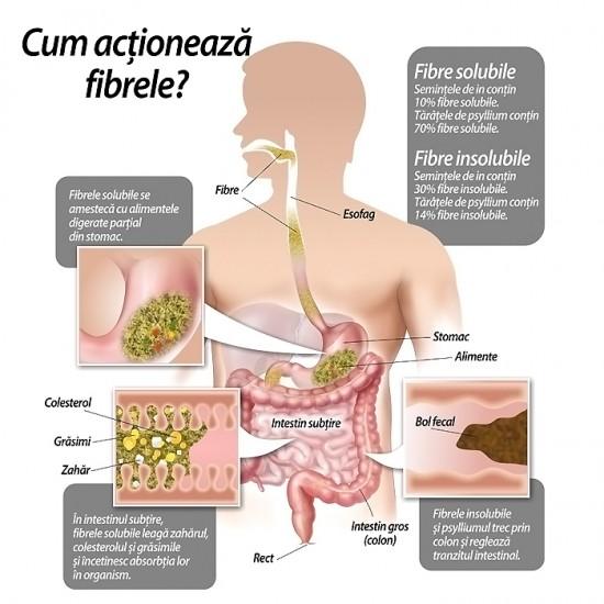 Polygemma nr.15 Intestin – detoxifiere