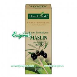 Extract din mladite de maslin - 50ml