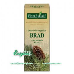 Extract muguri brad – 50ml