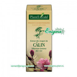 Extract din muguri de calin – 50ml