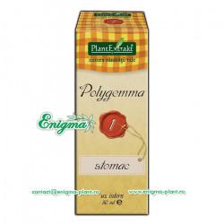 Polygemma 1 - Stomac